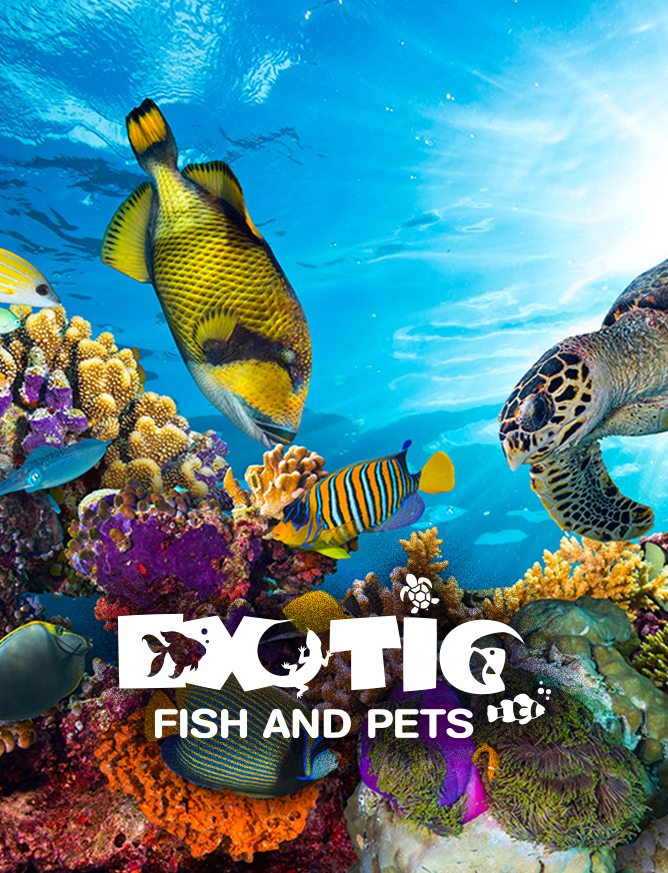 Logo For Pet Store | Exotic Fish And Pets