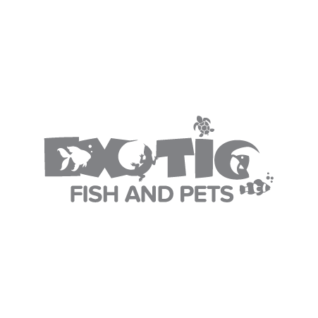 Exotic Fish and Pets
